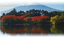 Viajes a Japón desde México