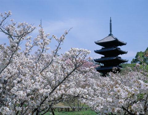 Paquetes de Viajes Baratos a Japón desde