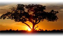 Viaje a Sudáfrica en Semana Santa y Fin de Año