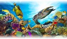 Viaje a Pacífico Sur en Semana Santa y Fin de Año