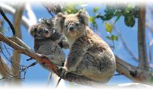 gran tour de australia y nueva zelanda