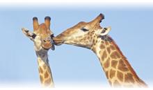 lo mejor de sudáfrica y cataratas victoria (zambia) con chobe