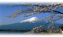 tokyo (con excursiones)