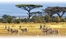 recuerdos de kenya y mauricio (selección)