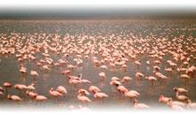 tanzania: safari karibu (sopa)