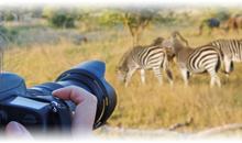 Tour a Sudáfrica desde