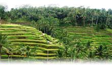 Viaje Indonesia 2x1 Ofertas