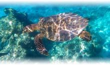 maldivas: hotel cocoon maldives (hab. beach villa) en ti