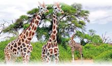 sudáfrica en reserva privada kapama
