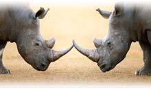 sudáfrica en reserva privada karongwe