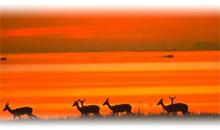 escapada a sudáfrica y cataratas victoria (zambia) con chobe