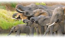 maravillas de sudáfrica y cataratas victoria (zimbabwe)