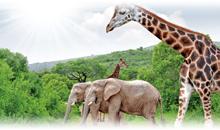Itinerarios de Viaje África Precios