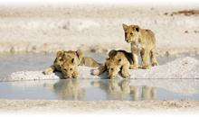sudáfrica fantástica ii y cataratas victoria (zimbabwe) con chobe