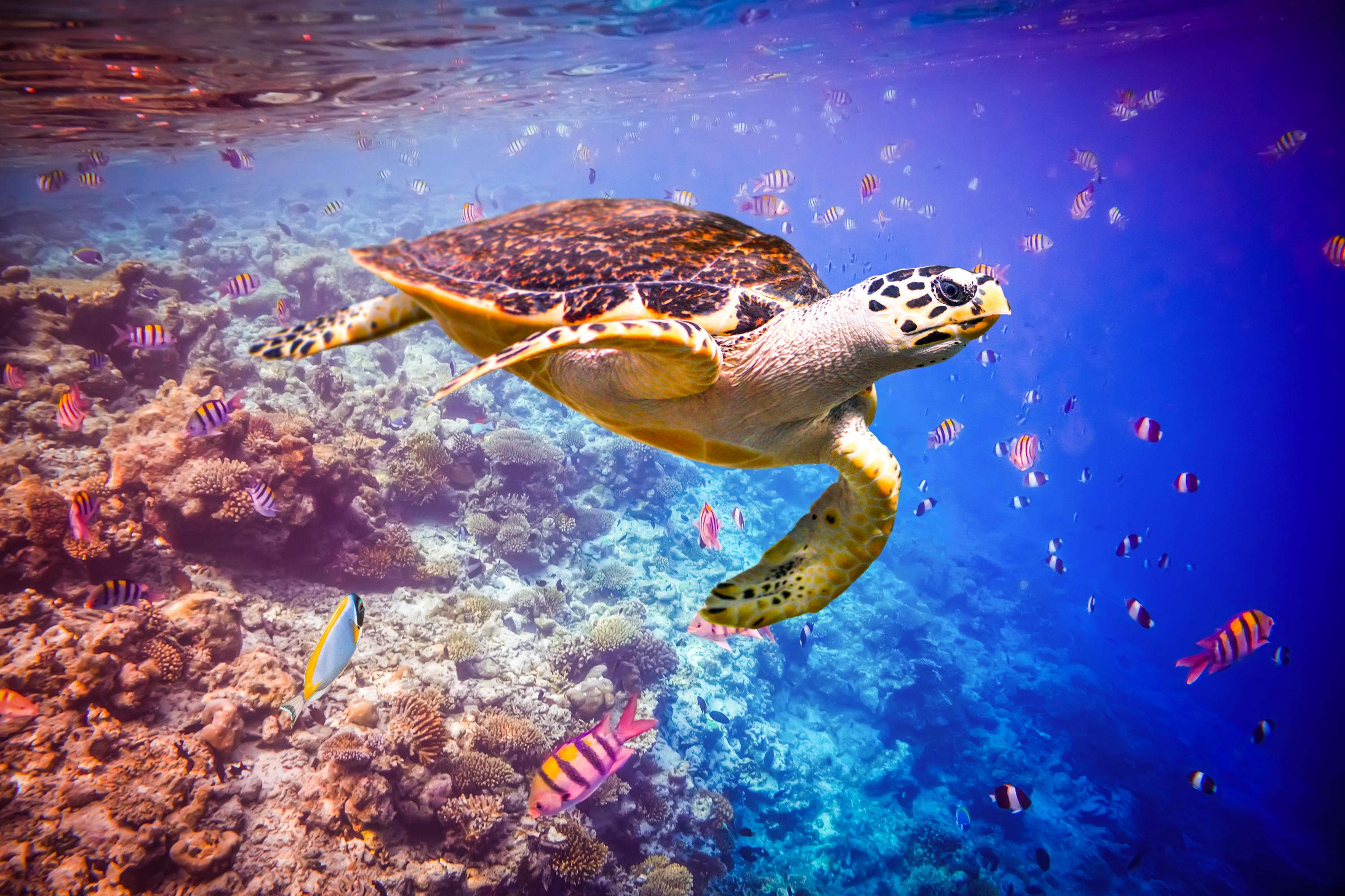 maldivas: hotel cocoon maldives (lagoon villa) (ti)