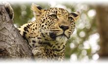 descubriendo sudáfrica y cataratas victoria (zambia)