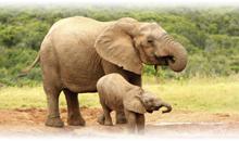 sudáfrica en reserva privada y cataratas victoria (zambia) con chobe