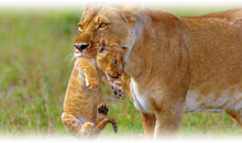 sudáfrica con cataratas victoria (zambia) y mauricio (selección)