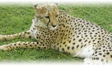 sudáfrica esencial y mauricio (lujo)