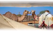 DUBAI FANTASTICO Y ABU DHABI