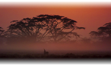 kenya, safari simba y mauricio (selección)