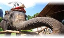 bellezas de tailandia (bangkok/chiang mai)