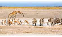 ruta masai y playa de mombasa (con regreso a nairobi)