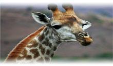 sudáfrica esencial y cataratas victoria con chobe (zambia)
