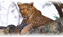 gran safari desde kenya a tanzania