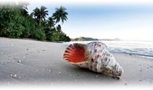Paquetes Vacacionales para Pacífico Sur Vuelo y Hotel Incluido