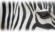 descubriendo sudáfrica (pilanesberg)