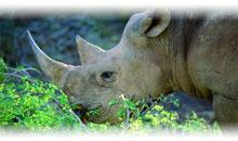 descubriendo sudáfrica (pilanesberg) y cataratas victoria (zimbabwe) con chobe