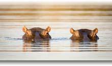 grandes parques de sudafrica y cataratas victoria (zambia)