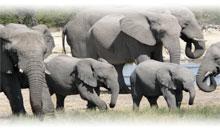 sudáfrica en reserva privada y cataratas victoria (zimbabwe) (desde abril 2020)