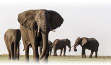 descubriendo sudáfrica y cataratas victoria (zimbabwe) con chobe