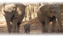 grandes parques de sudafrica y cataratas victoria (zimbabwe) con chobe (desde abril 2020)