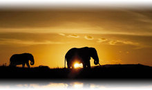 Viaje África 2x1 Ofertas