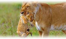 sudáfrica con cataratas victoria (zambia) y mauricio (selección) (desde abril 2020)