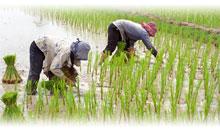 Vacaciones en Vietnam Promociones